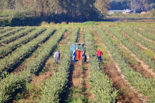 """העסקת עובדים פלסטינים בחקלאותהעסקת עובדים פלסטינים בחקלאות - עו""""ד ענאן חמאם"""